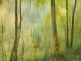 Impression of an Autumn Forest, North Lanarkshire, Scotland, UK, 2007 Photographic Print by Niall Benvie