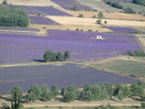 Mosaic of Fields of Lavander Flowers Ready for Harvest, Sault, Provence, France, June 2004 Photographic Print by Inaki Relanzon