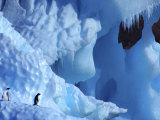 Two Adelie Penguins on Iceberg, Antarctica Posters by Edwin Giesbers