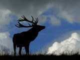 Silhouette of Red Deer Stag, Dyrehaven, Denmark Photographic Print by Edwin Giesbers
