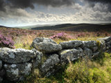 Dry Stone Wall, Near Birch Tor, Dartmoor Np, Devon. September 2008 Photographic Print by Ross Hoddinott
