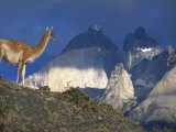Guanaco with Mountains Behind, Torres Del Paine Np, Patagonia, Chile Photographic Print by Inaki Relanzon