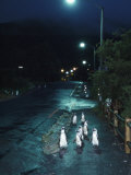 Black Footed Jackass Penguins Walking Along Road at Night, Boulders, South Africa Photographic Print by Inaki Relanzon