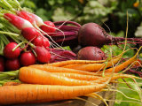 Freshly Harvested Carrots, Beetroot and Radishes from a Summer Garden, Norfolk, July Photographic Print by Gary Smith