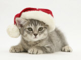 Grey Spice Kitten Wearing a Father Christmas Hat Posters par Jane Burton