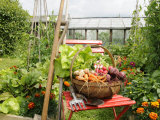 Summer Potager Style Garden with Freshly Harvested Vegetables in Wooden Trug, Norfolk, UK Photographic Print by Gary Smith