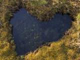 Heart-Shaped Pool on Saltmarsh, Argyll, Scotland, UK, November 2007 Posters by Niall Benvie