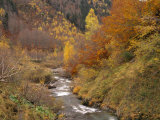 River Flowing Through Autumnal Forest in the Valley of Varrados, Val D'Aran, Catalonia, Pyrenees Posters by Inaki Relanzon