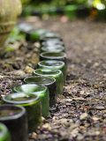 Upturned Bottles Used as Path Edging Feature in an Urban Garden, Norfolk, UK Posters by Gary Smith