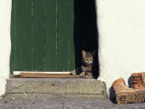 Tabby Cat Resting in Open Doorway, Italy Photographic Print by Adriano Bacchella