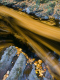 River North Esk Loaded with Beech Leaves, Angus, Scotland, UK, October 2007 Photographic Print by Niall Benvie