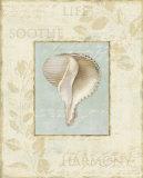 Soothing Words Shells IV Plakaty autor Lisa Audit