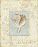 Soothing Words Shells IV Poster by Lisa Audit