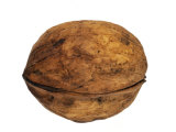 Philippe Clement - Common Walnut, Native to Southern Europe and Asia Fotografická reprodukce