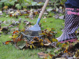 Gardener Raking Fallen Leaves with Lawn Rake, UK, November 2008 Photographic Print by Gary Smith