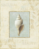 Soothing Words Shells I Posters by Lisa Audit