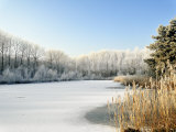 Hoarfrost Covered Trees Along Frozen Lake in Winter, Belgium Photographic Print by Philippe Clement