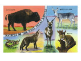 Texas - View of West Texas Natives: Buffalo, Coyote, Rattlesnake, Bob Cat, Antelope, Deer, c.1943 Prints by  Lantern Press