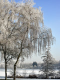 Frozen Pond in Park Landscape with Birch Trees Covered in Hoarfrost, Belgium Photographic Print by Philippe Clement