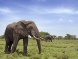 African Elephant Tanzania Photographic Print by Edwin Giesbers