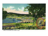 San Angelo, Texas - View of Sheep on the Range, c.1948 Art by  Lantern Press