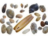 Collection of Shells Photographic Print by Philippe Clement