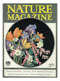Nature Magazine - View of Flowers, c.1927 Posters by  Lantern Press