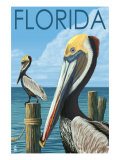 Brown Pelicans - Florida, c.2008 Poster by  Lantern Press