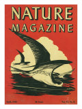 Nature Magazine - View of Sea Gulls Grazing the Water, c.1948 Posters by  Lantern Press
