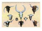 San Antonio, Texas - Buckhorn Curio Museum, Freak Cattle Horns, Double-Headed Calf, c.1937 Prints by  Lantern Press