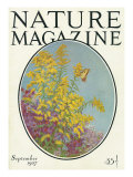 Nature Magazine - View of Blooming Flowers and a Butterfly, c.1927 Prints by  Lantern Press