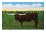 Texas - View of a Texan Longhorn (Steer) with Horns over Nine Feet, c.1940 Prints by  Lantern Press
