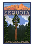Sequoia Nat'l Park - Sequoia Tree and Palisades - Lp Poster, c.2009 Prints by  Lantern Press