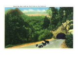 Great Smoky Mts. Nat'l Park, Tn - View of a Black Mamma Bear and Cubs on the Highway, c.1937 Prints