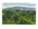 Great Smoky Mts. Nat'l Park, Tn - View of Clingman's Dome, c.1936 Prints
