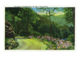 Great Smoky Mts. Nat'l Park, Tn - Fire Trail View at Junglebrook on the Way to the Orchard, c.1937 Prints