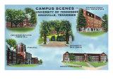 University Tennesee, Poster