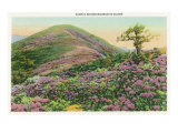 Great Smoky Mts. Nat'l Park, Tn - View of Purple Rhododendron in Bloom, c.1940 Posters