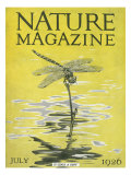 Nature Magazine - View of a Dragonfly over a Pond, c.1926 Posters par  Lantern Press