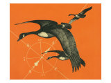 Nature Magazine - View of Canadian Geese Flying South, c.1949 Art by  Lantern Press