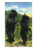 Great Smoky Mts. Nat&#39;l Park, Tn - View of Two Black Bear Standing, c.1938 Art