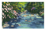 Great Smoky Mts. Nat'l Park, Tn - Scenic View of a Mountain Stream, c.1946 Posters