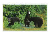 Great Smoky Mts. Nat'l Park, Tn - View of Black Bears in the Park, c.1941 Poster