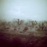 Summer Hail and Thunderstorm Falling on Desert Fotografisk tryk af Loomis Dean