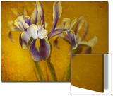 Iris Prints by Irene Suchocki