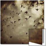 Birds Flying overhead Posters av Ewa Zauscinska
