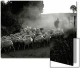 The Shepherd Plakater av Monika Brand