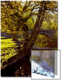 Cotswold Bridge Print by Jody Miller