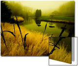 Golden Plant Growth along Peaceful River Posters by Jan Lakey