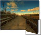 Marsh Path Prints by Irene Suchocki